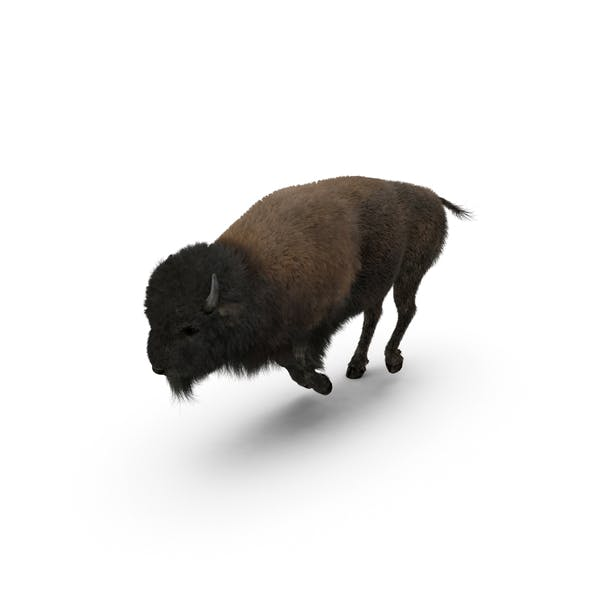 Thumbnail for American Bison Running