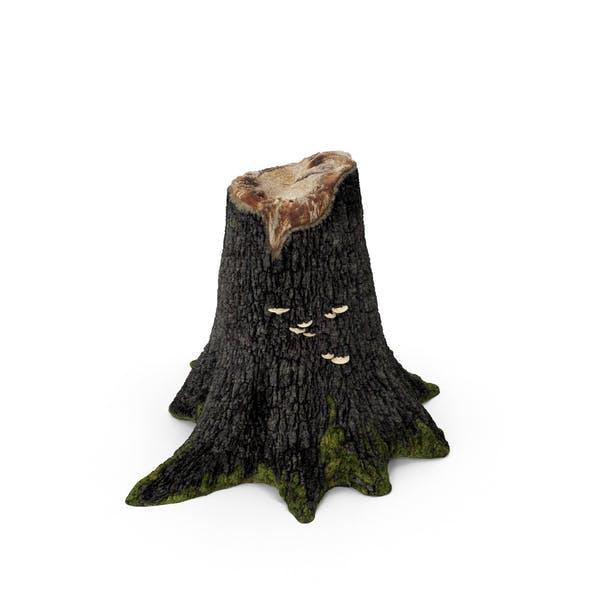 Пень дерева