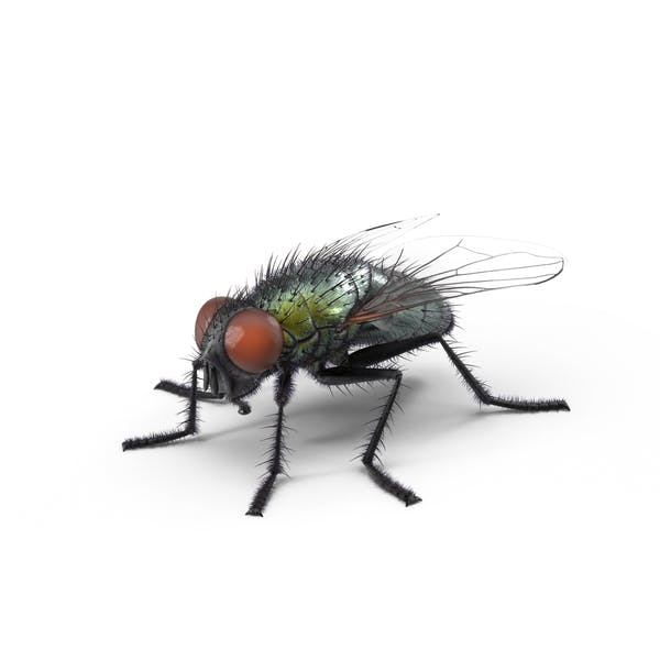 Cover Image for Green Fly