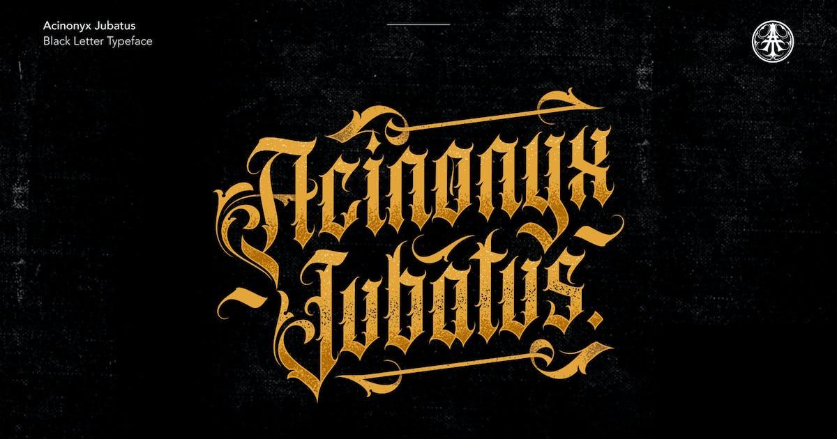 Download Acinonyx Jubatus by ilhamtaro