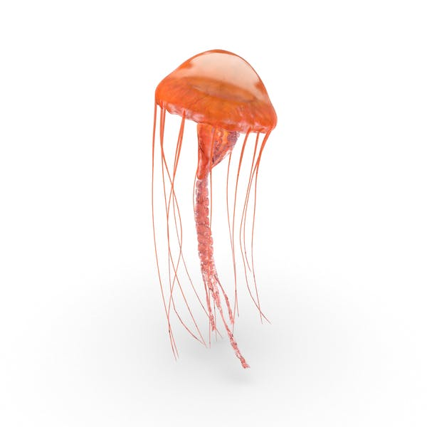 Cover Image for Jellyfish