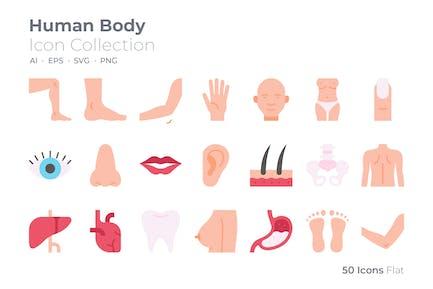 Human Body Color Icon
