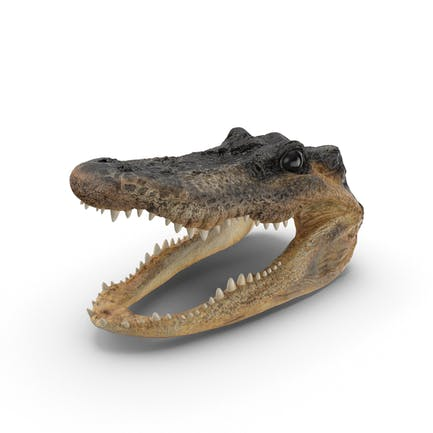 Cabeza de cocodrilo