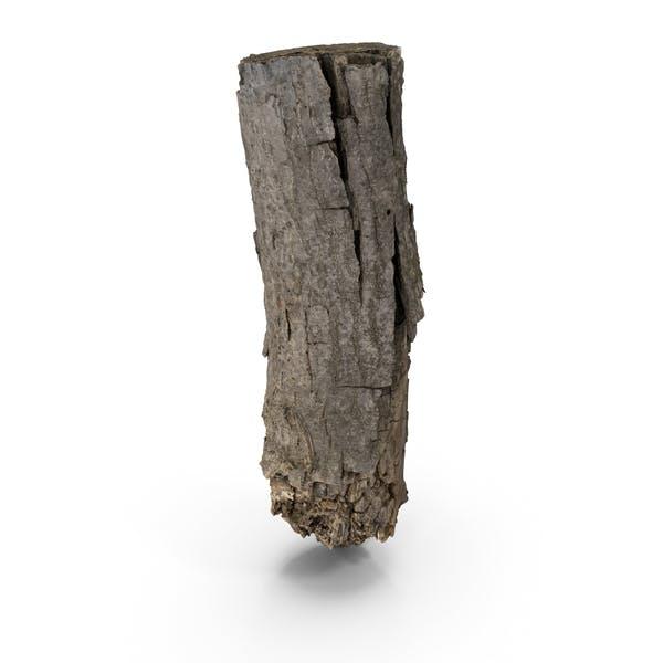 Кора дерева отсканирована