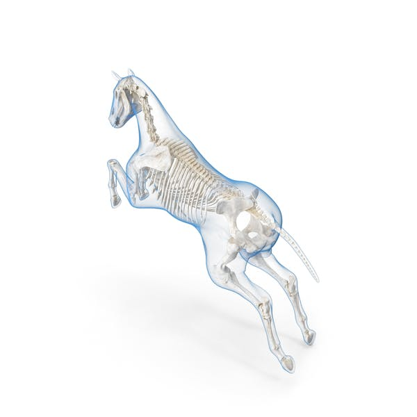 Jumping Horse Envelope with Skeleton