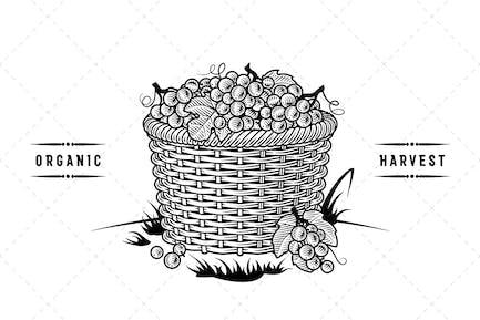 Retro Basket Of Grapes Black And White