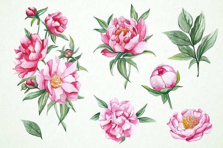 Thumbnail for Watercolor Peonies Clipart