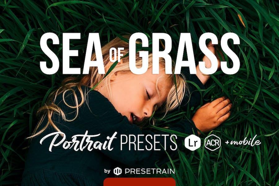 Sea of Grass Presets for Desktop & Mobile