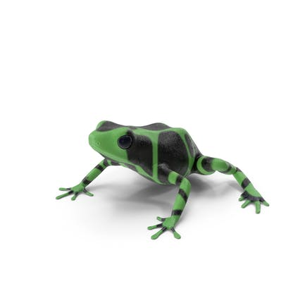 Green Black Dart Frog