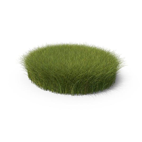 Tall Grass Patch