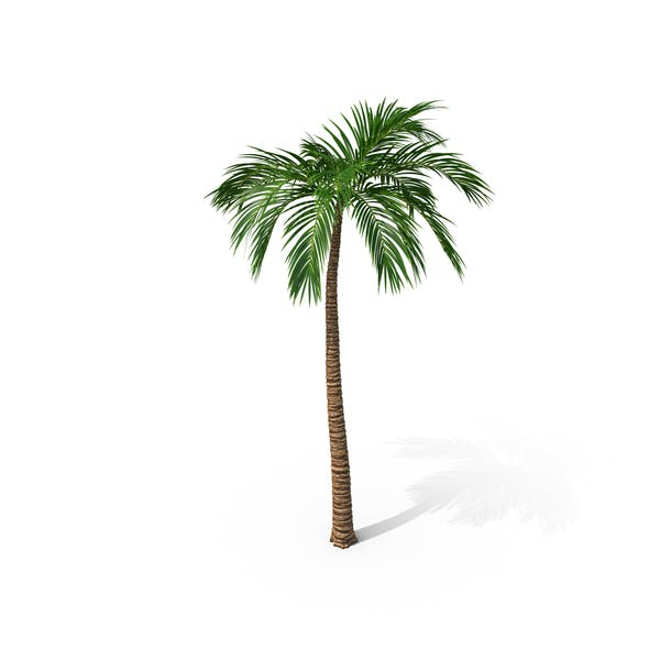 Thumbnail for Palm Tree