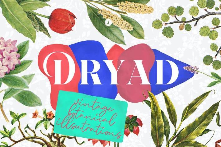 Thumbnail for Dryad - Botanical Illustrations