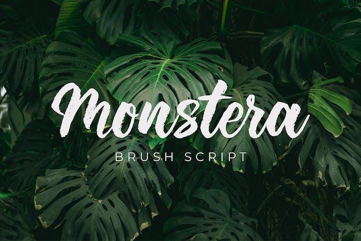 Thumbnail for Monstera