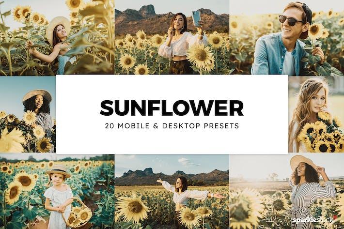 Thumbnail for 20 Sunflower Lightroom Presets & LUTs