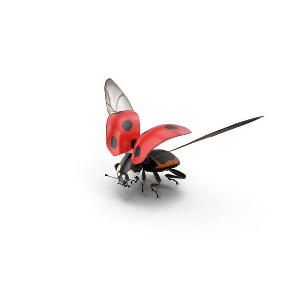 Marienkäfer fliegen