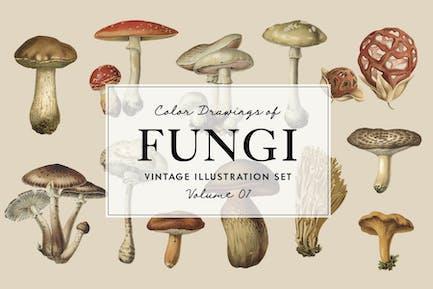 Fungi Vol. 01 - Vintage Illustrations