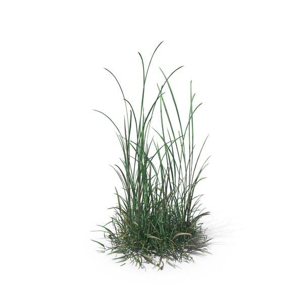 Simple Grass