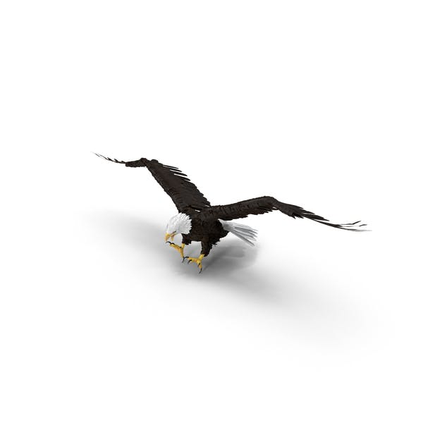 Thumbnail for Bald Eagle Attacking
