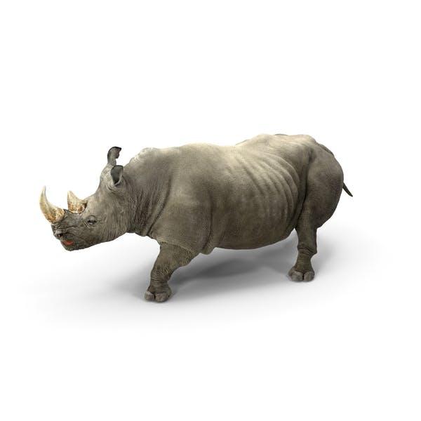 Rhino Walking Pose
