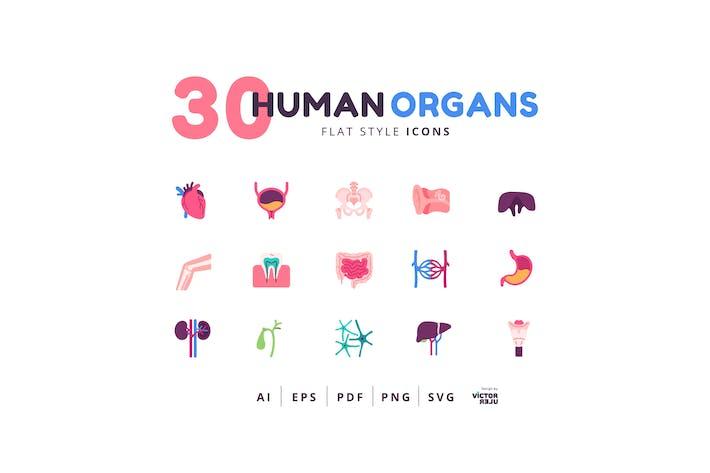 30 Icons Human Organs Flat Style