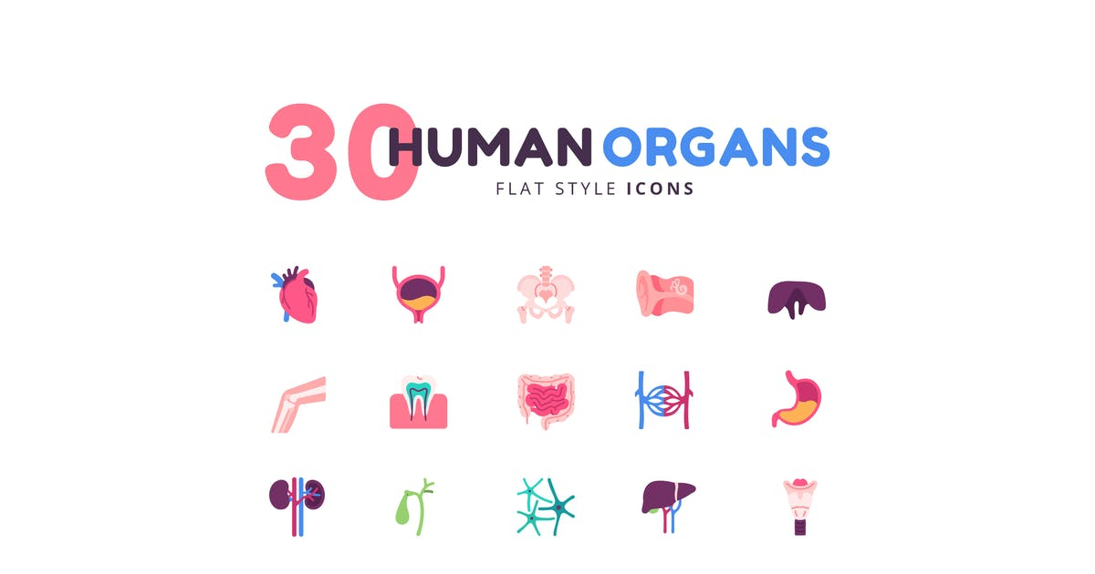 Download 30 Icons Human Organs Flat Style by Victoruler