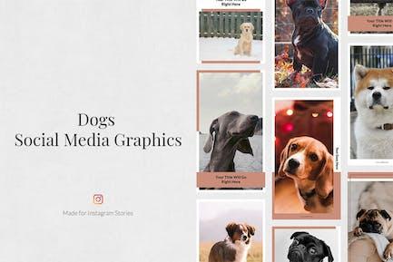 Hunde Instagram Stories