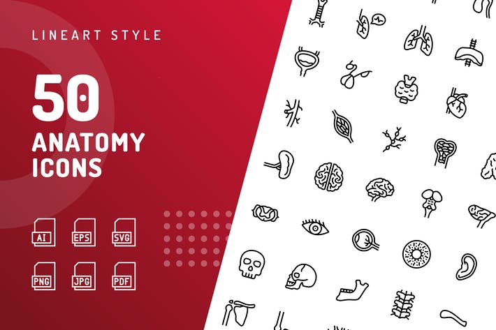 Thumbnail for Anatomy Line Icons