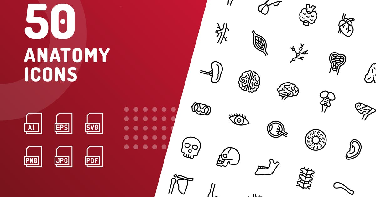 Download Anatomy Line Icons by kerismaker