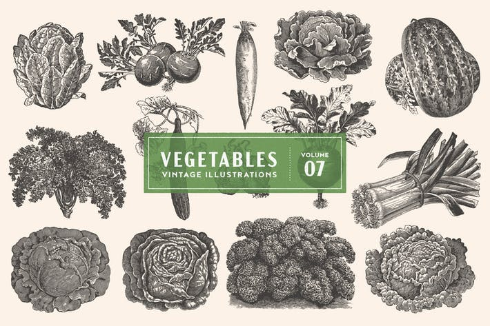 Thumbnail for Vintage Vegetable Illustrations Vol. 7