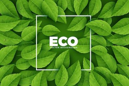 Grüne Ökologie Hintergrund