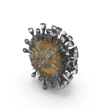 Neuartiger Corona-Virus-Querschnitt