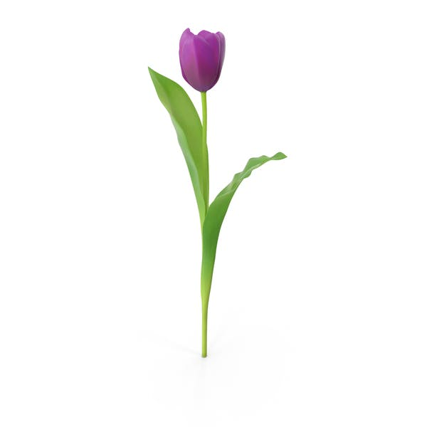 Thumbnail for Tulips Purple