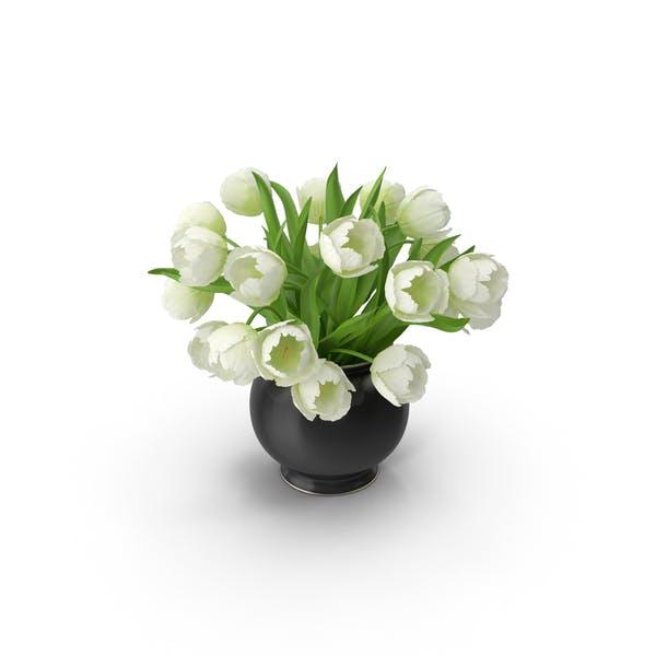 Thumbnail for White Tulips