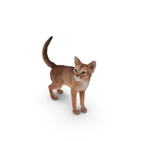 Thumbnail for Abyssinian Cat