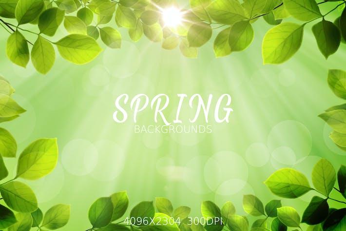 Thumbnail for Fondos de hojas de primavera