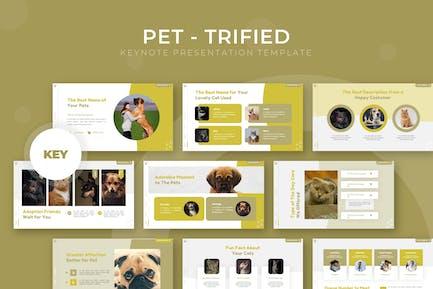 Pet-trified - Keynote Template