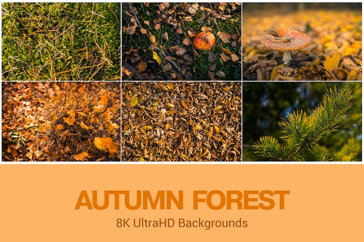 Thumbnail for 8K Autumn Theme Backgrounds Set