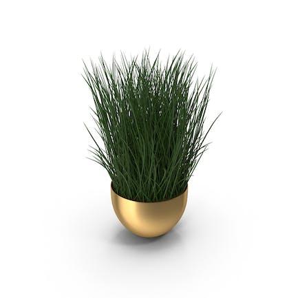 Recipiente para plantas de latón.