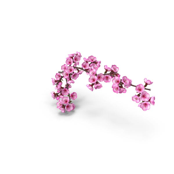 Sakura Tree Branch with Pink Flowers