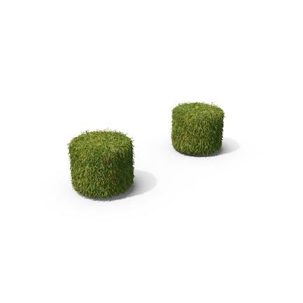 Grass Colon Symbol
