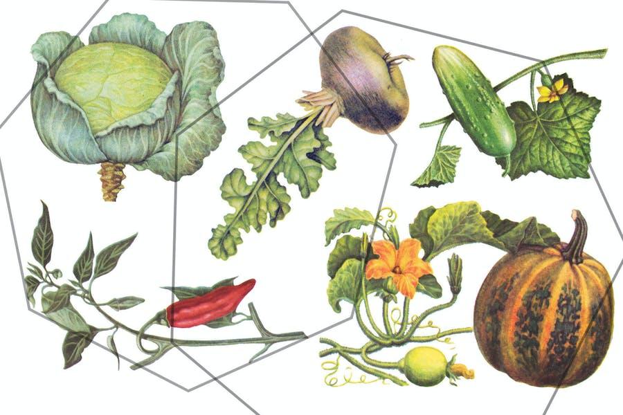 Autumn vegetables vintage set