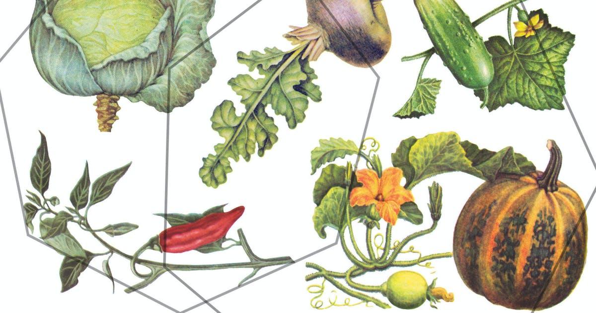Download Autumn vegetables vintage set by kaleriia
