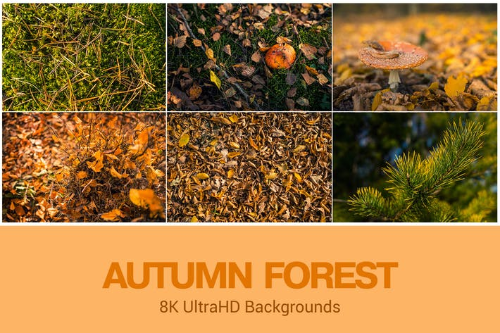 Thumbnail for 8K UltraHD Autumn Forest Theme Background Set