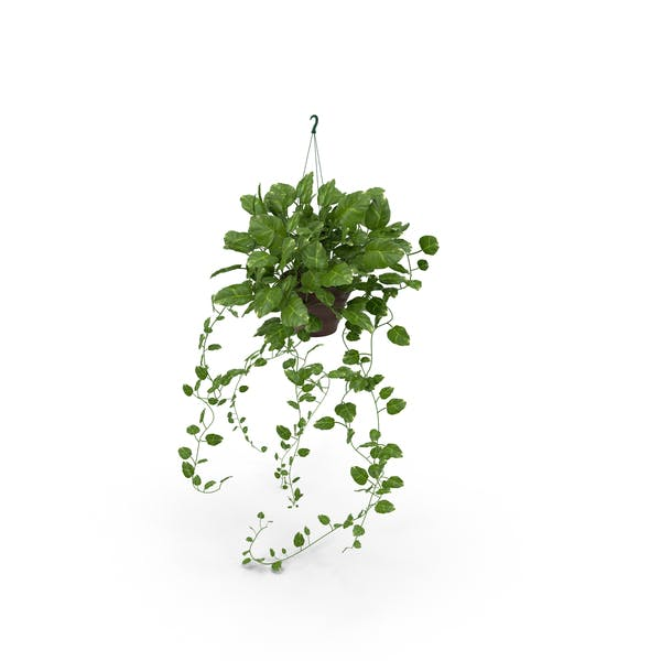 Dangling Ivy in Red Pot