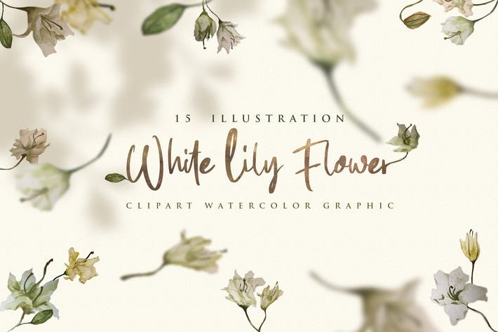 Thumbnail for 15 Watercolor White Lily Flower Illustration