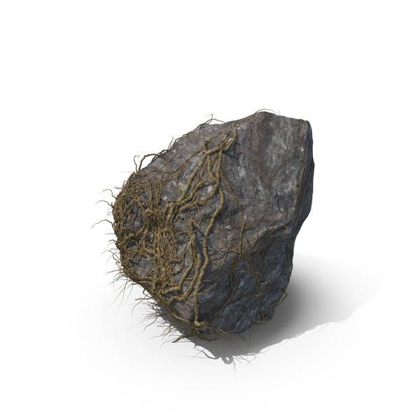 Rebe Bedeckter Felsen