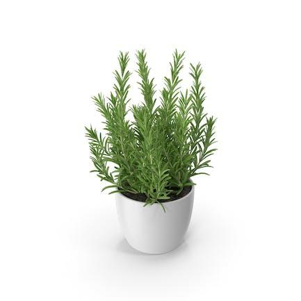 Rosemary Round Pot White