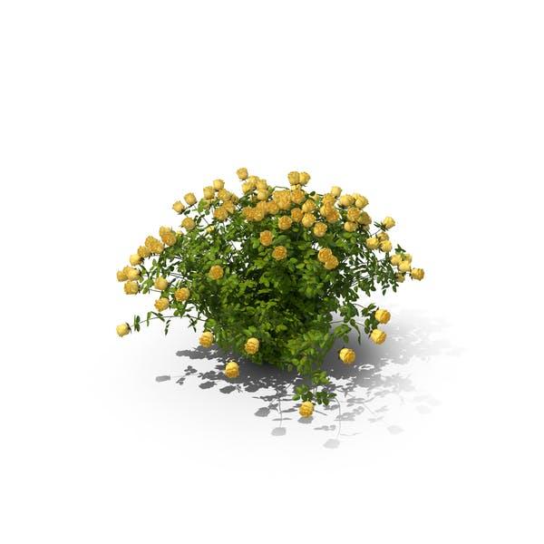 Thumbnail for Gelbe Rose Busch