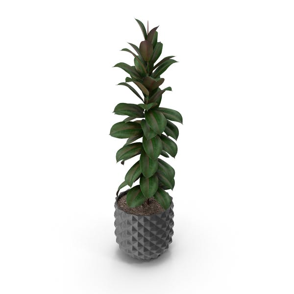 Cover Image for Potted Plant