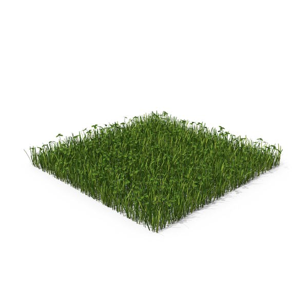 Thumbnail for Grass With Clovers